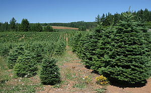 Christmas tree production - A Christmas tree farm in the U.S. state of Oregon. Oregon had more area devoted to the crop than any other U.S. state in 2002.