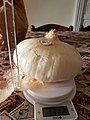 Cipolla Giarratana fronte.jpg