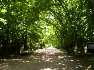 City Bell - Tree lined street in City Bell