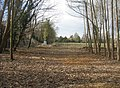 Cleared woodland by the guided busway - geograph.org.uk - 1587322.jpg