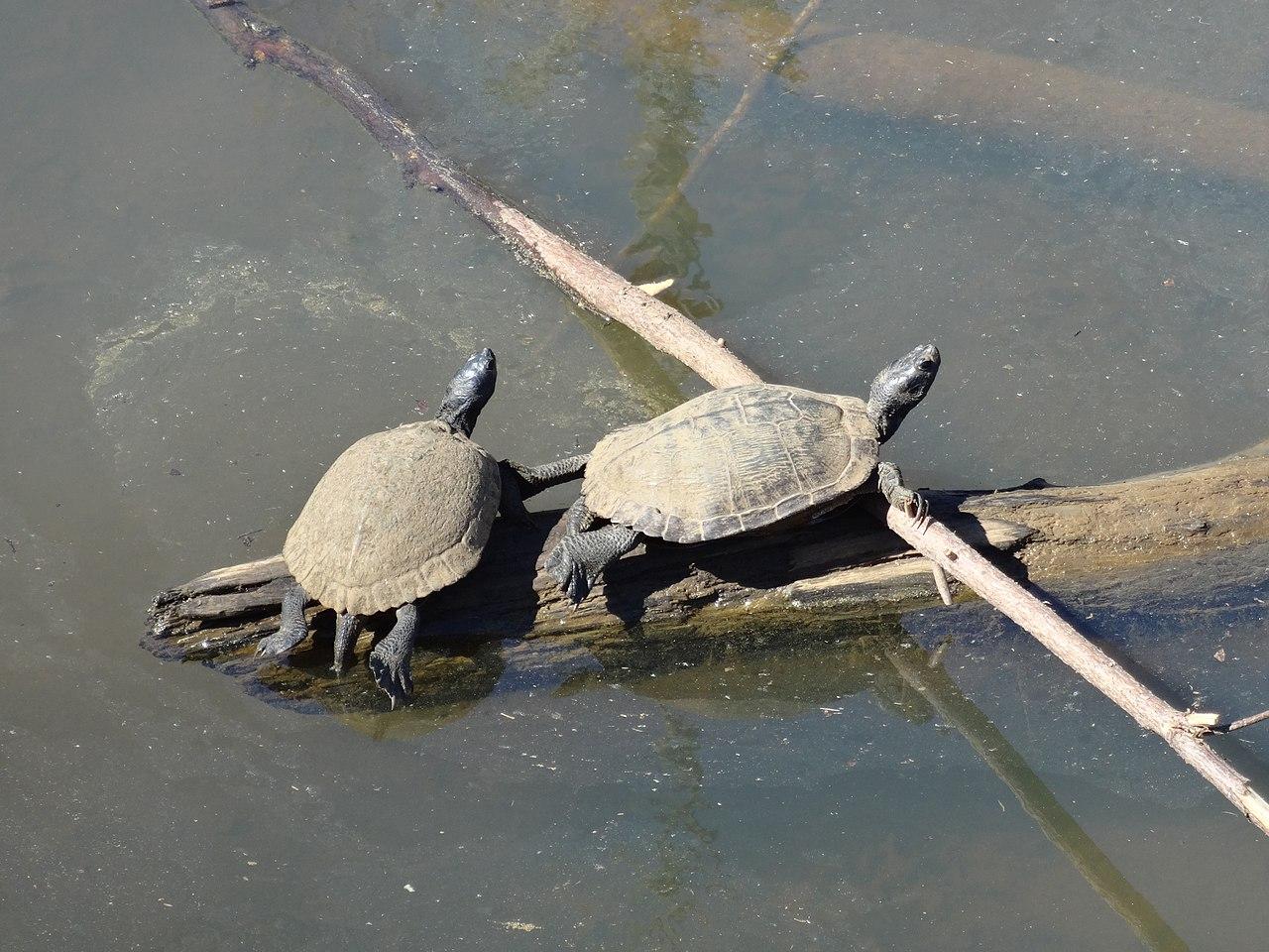 Bendigo Tourism - Lake Neangar and