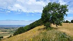 Coaley Peak Gradiant