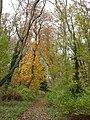 Cobbs Wood - geograph.org.uk - 33400.jpg