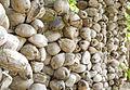 Coconut wall.jpg