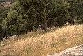 Coll de Panissars 2013 07 21 22 M8.jpg