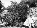 Collectie Nationaal Museum van Wereldculturen TM-10021340 Een man poseert bij rotsvegetatie in de vorm van een vruchtdragende struik Saba -Nederlandse Antillen fotograaf niet bekend.jpg