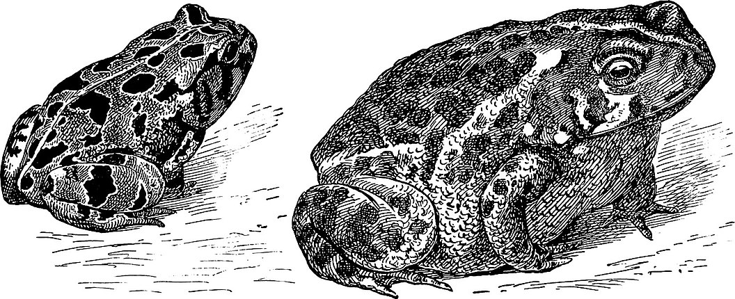 d h lawrence snake tortoise shout humming Tortoise shout i thought he was dumb, i said he was dumb, yet i've heard him cry first faint scream, out of life's unfathomable dawn, far off, so far, like a madness, under the horizon's dawning rim, far, far off, far scream.