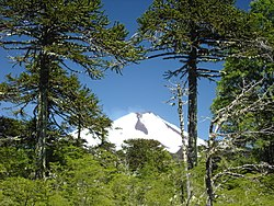 Conguillío国立公園