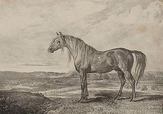 Copenhagen (horse) - Copenhagen in retirement, a lithograph by James Ward.