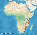 Cordyla africana02.jpg