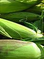 Corn husks (1350123723).jpg