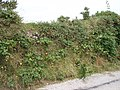Cornish Hedge at Busveal - geograph.org.uk - 36061.jpg