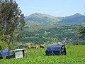 Cosechas de primavera , Vistas de Parres. - panoramio.jpg