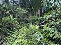 CostaRica (6108755720).jpg