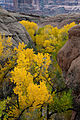 Courthouse Wash, Autumn Leaves (6550017045).jpg