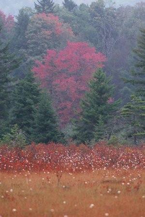 Cranberry Glades - Cranberry Glades
