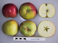 Cross section of Bloody Butcher, National Fruit Collection (acc. 1950-075).jpg