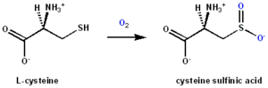 Cysteine dioxygenase - CDO reaction scheme showing cysteine sulfinic acid formation from cysteine by dioxygen incorporation