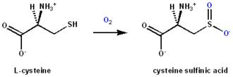 Cysteine dioxygenase - CDO reaction scheme showing cysteine sulfinic acid formation from cysteine by dioxygen incorporation