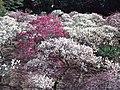 Dômyô-ji-tenman-gû Shrine - Plum Garden.jpg
