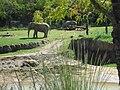 Dallas Zoo Elephant.jpg