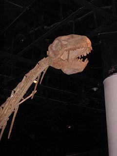 <i>Datousaurus</i>