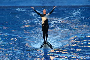 Blackfish (film) - Dawn Brancheau at SeaWorld Orlando in 2006.