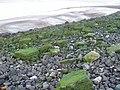 Dee estuary - below the sewage outlet - geograph.org.uk - 709288.jpg
