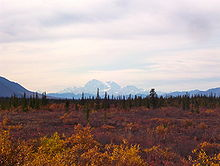 Mount McKinley in the far background, behind a field of evergreens and orange shrubs.