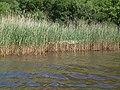 Derwent Water MMB 21.jpg