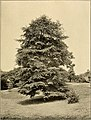 Descriptive guide to the grounds, buildings, and collections. Native trees of the Hudson River Valley (1909) (20692278608).jpg