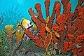 Diorama of a Pennsylanian seafloor - Amphicentrum fish, sponge, crinoids, rugose corals 1 (45642213781).jpg