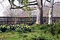 Do you remember Spring-time^ Bushy Park, Greater London. - panoramio.jpg