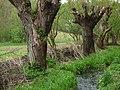 Drahanské údolí - panoramio (8).jpg