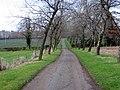 Driveway to Kingston Farm - geograph.org.uk - 94473.jpg