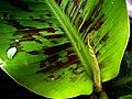 Droplet on Leaf.jpg