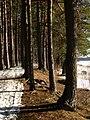 Druvciema piekraste - panoramio (5).jpg