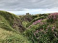 Dunnottar Castle rosebay willowherb.jpg