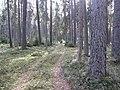 Dusetų sen., Lithuania - panoramio (98).jpg