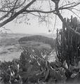 ETH-BIB-Abessinische Landschaft-Abessinienflug 1934-LBS MH02-22-0674.tif
