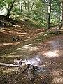 Eastern rampart of Buckland Rings - geograph.org.uk - 255971.jpg