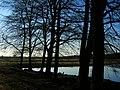 Edge of Marles Wood - geograph.org.uk - 1743193.jpg
