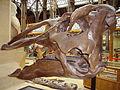 Edmontosaurus skull 2.JPG