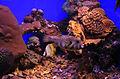 Eilat UnderwaterObservatory RareFish 9986.JPG