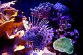Eilat aquarium.jpg