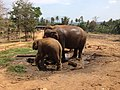 Elephant orphanage Sri Lanka - panoramio (2).jpg