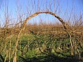 Entrance to a willow maze - geograph.org.uk - 291837.jpg