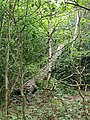 Epping Forest 20170727 112142 (49374911232).jpg