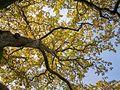 Etxarri-Aranatz - Sendero de los Robles Singulares 01.jpg