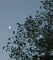 Evening Moon.JPG